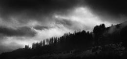 Greskine Forest