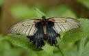 Butterfly 2 by jasonewell