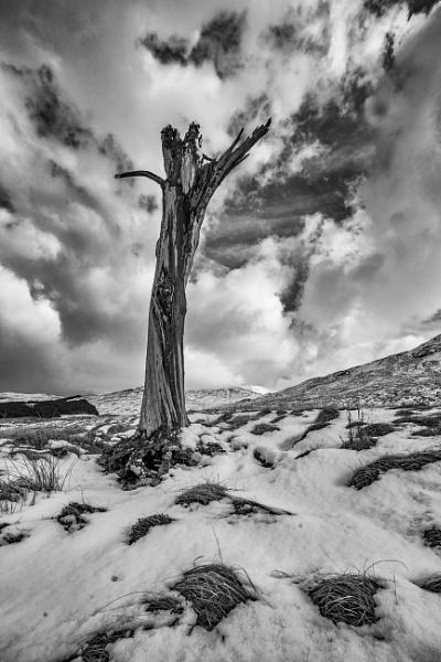 Lone Tree by Jedross