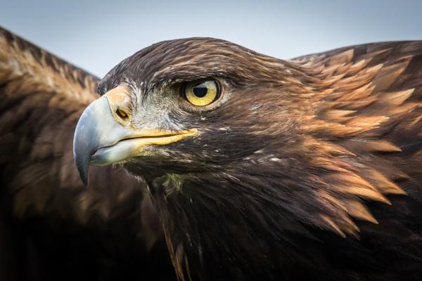 Golden Eagle by grahammooreuk