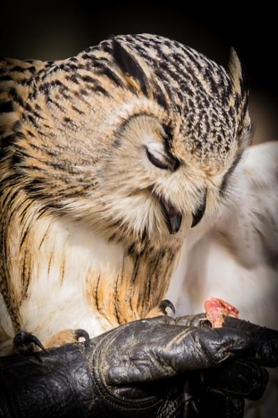 Feeding Time by grahammooreuk