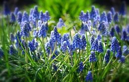 """Spring Blue""."