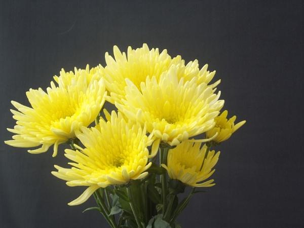Yellow flowers by kearasmith