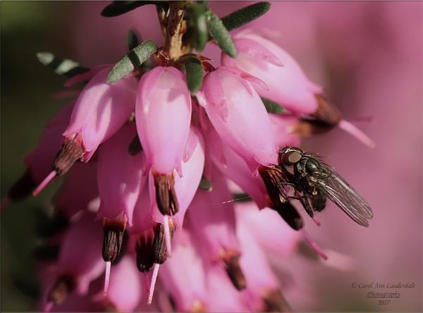 Springtime in the garden by canoncarol
