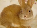 Young Bunny by Savvas511