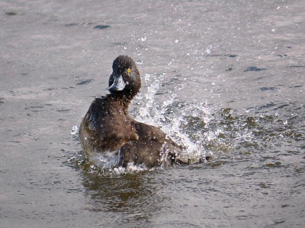 Making a splash by tom_earwaker