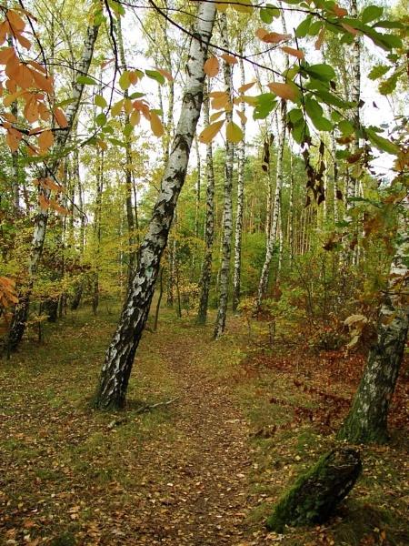 Autumnal Gleam Series #76 by PentaxBro