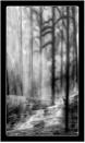 Mammoth Mist by dven