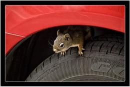 Squirrel Hiding