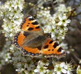 Basking in the Spring sunshine