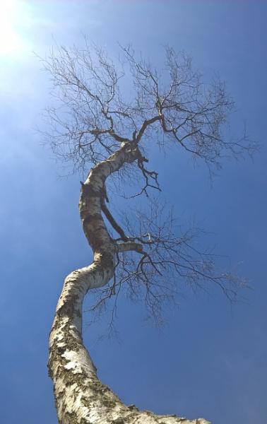 Twisted Tree by jondf