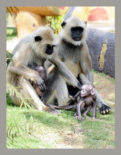 A family business by prabhusinha