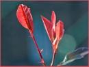 RED by JOKEN