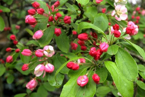Springtime by JuBarney