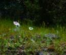 Anemonies Akrotiri by exposure