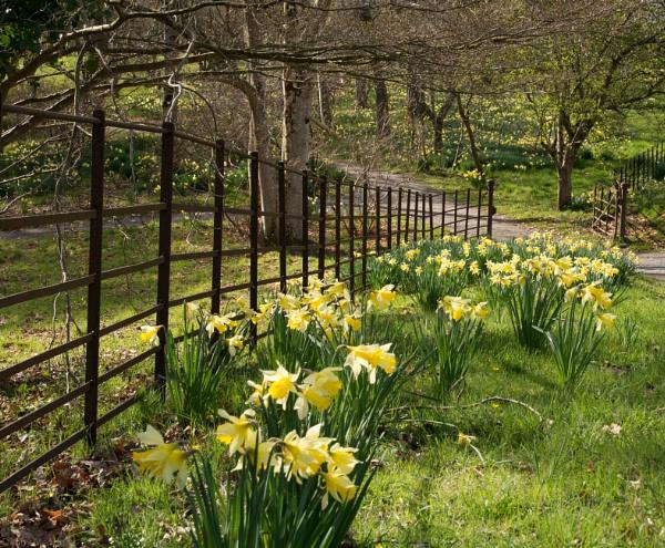 Daffodils & rust by Danny1970
