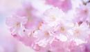 Spring blossom by Danny1970