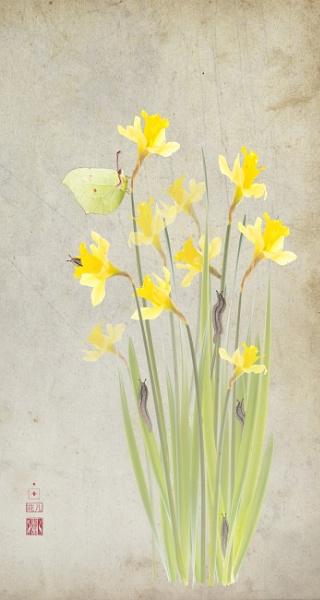 Daffodils and brimstone by Fionna
