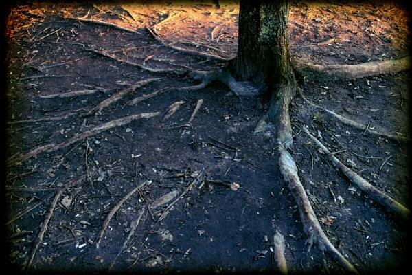Roots by Zenonas