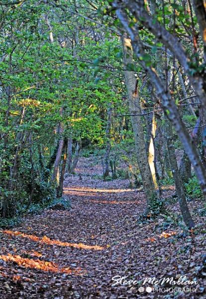 Carpet of Leaves by makka64