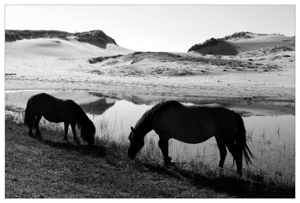 wilde paarden by bliba