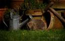 Hedgehog by SurreyHillsMan