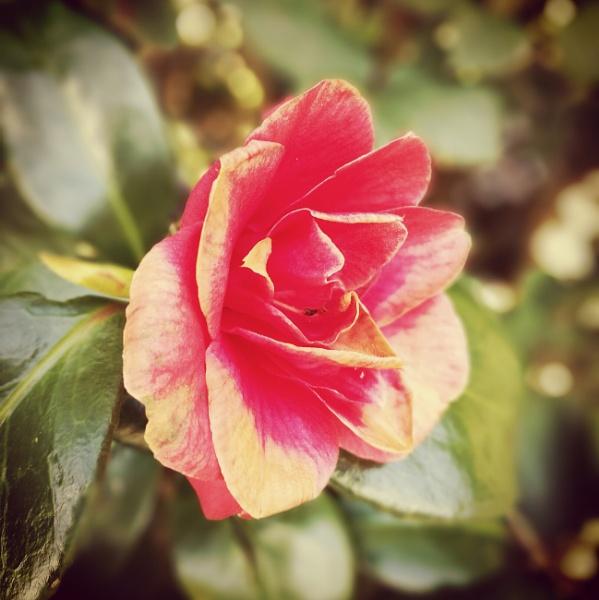 Square Crop Flower  by NikitaMorris