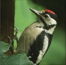 Mr Woodpecker