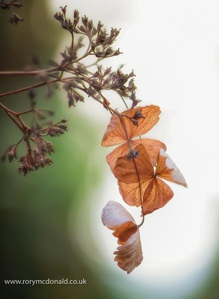 Leaves by Rorymac