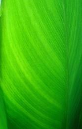 """"""" GREEN.......GREEN........! """""""