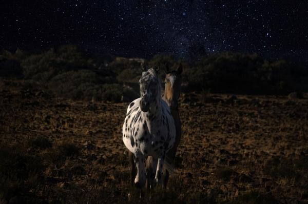 Starry starry Horses by Msalicat