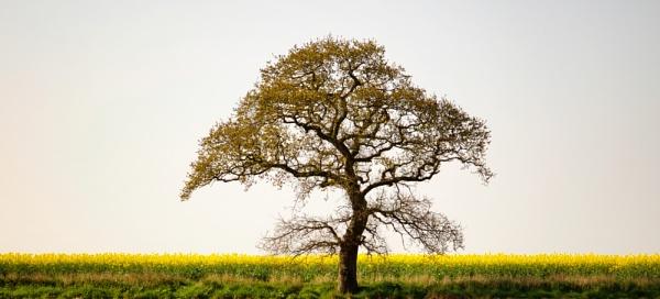 Tree (3) by marktc