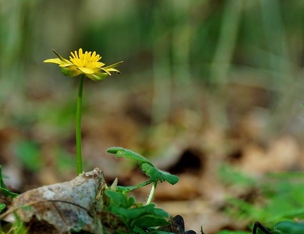 Spring flower by georgiepoolie