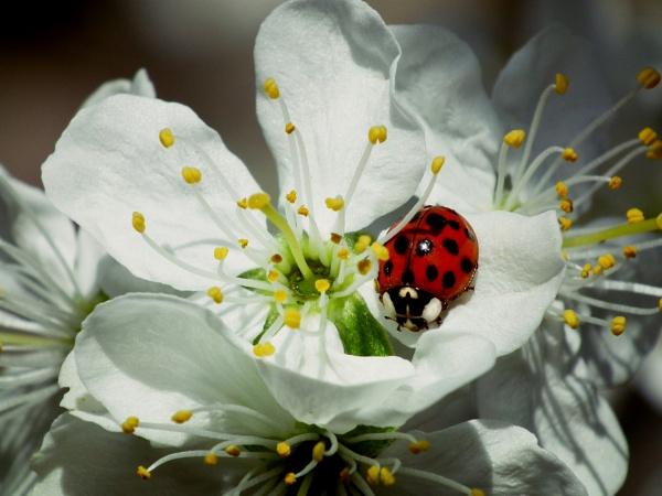 Gardeners friend is back by michelle30
