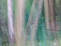 Daffs & Trees