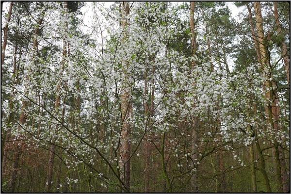 spring bush by FabioKeiner