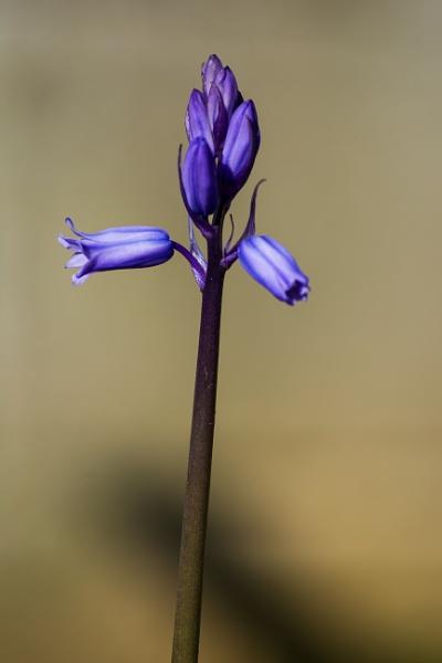 Emerging blue by Madoldie