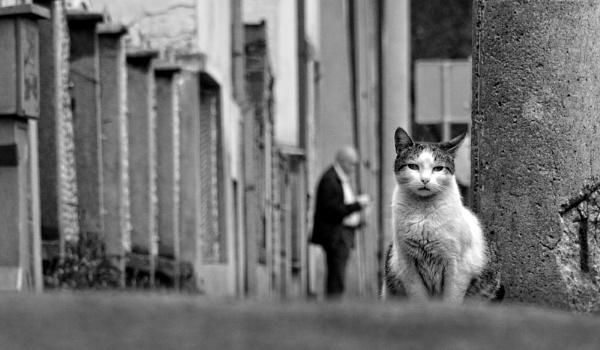 Urban Scene XCIX by MileJanjic