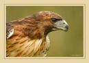 Bird of Prey by jasonewell