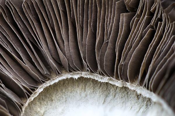 Mushroom by iangilmour
