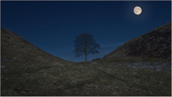 Moonlight on Sycamore Gap by Leedslass1