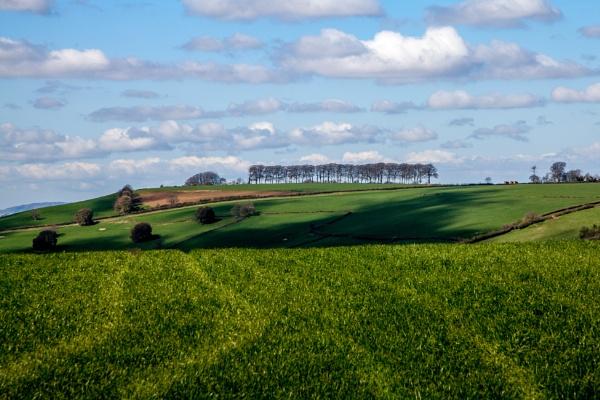 Wiltshire Fields by JohnnyBG