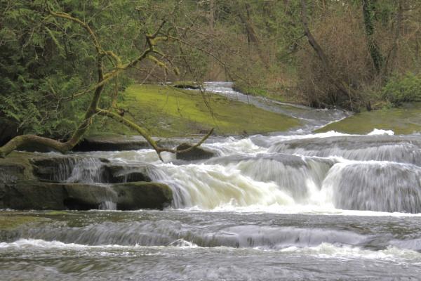 Millstone River in Bowen Park Nanaimo BC by Bear46404