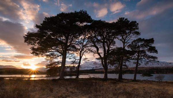 Loch Tulla Pines by PaulHolloway
