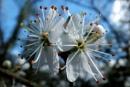 Spring Blossom by SUE118