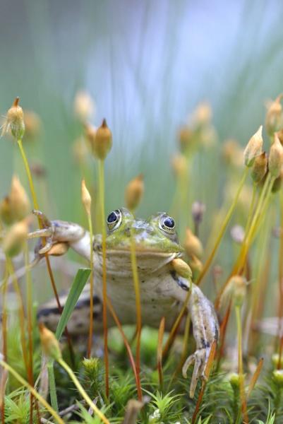 frog by ruurd
