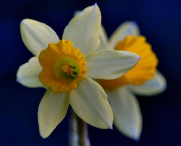 A Easter image by georgiepoolie