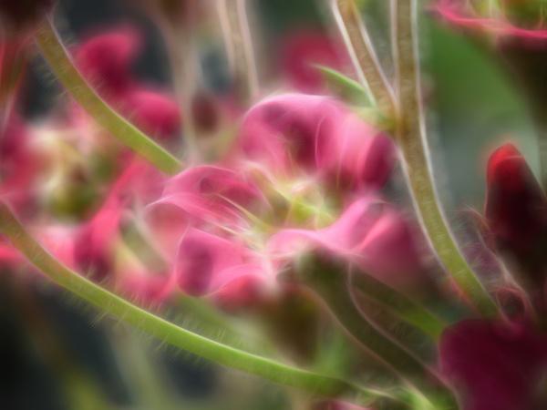 Magic garden by michelle30