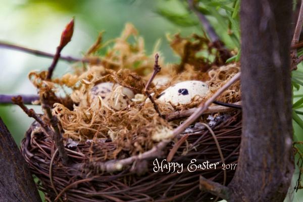 Hunt Treasure Egg by manicam