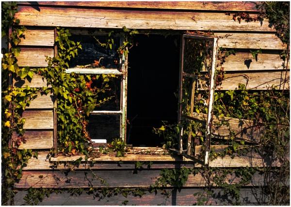Nature\'s Revenge by capto